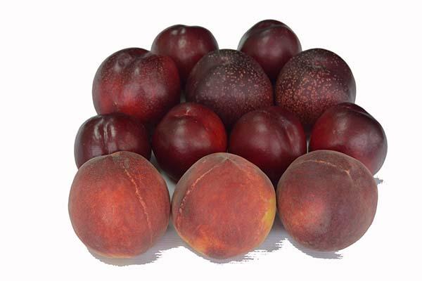 Melocotones y Nectarinas | Cohoca