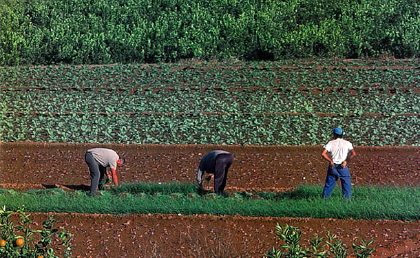 Agricultores en la huerta de Benifaió